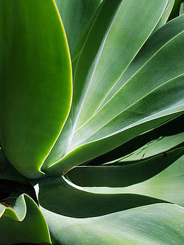 Agave Undulations No. 2 by Sandy Fisher