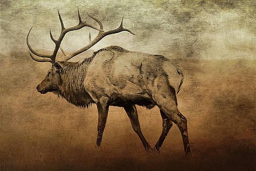 Aged Elk by TnBackroadsPhotos