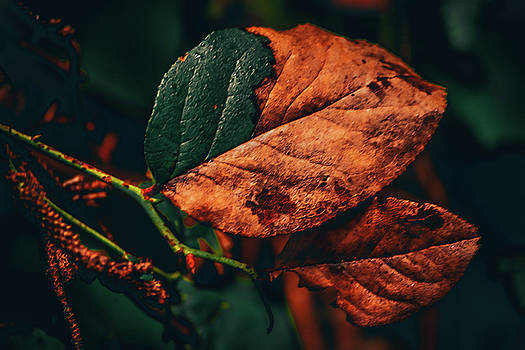 Aging Leaves by Bonnie Bruno