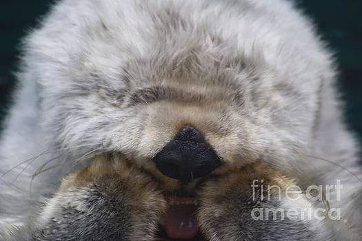 Nick Gustafson - Ahhhhhhhh