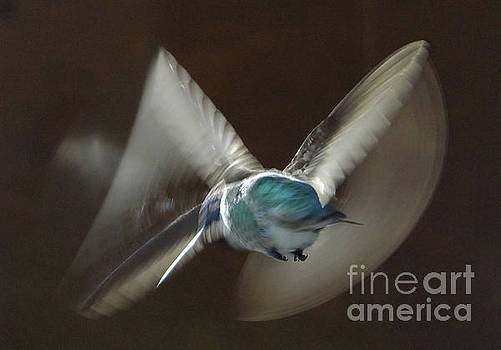 Air Dance by Mark Alan Perry