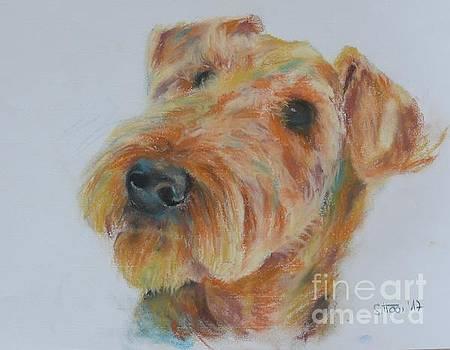 Airdale Terrier by Sabina Haas