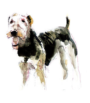 Airedale Terrier Watercolor by Belette Le Pink