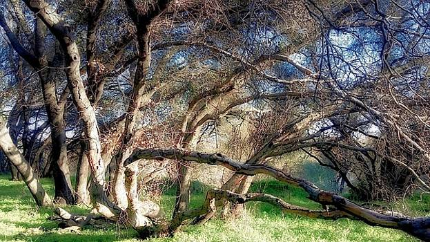 Airy Tree by Dori Basilius