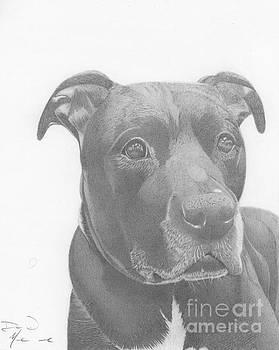 Ajax Graphite Dog Portrait  by Dave Nevue