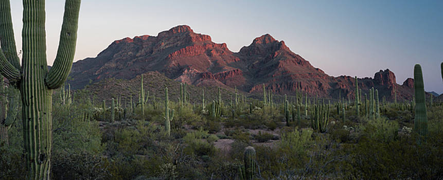 Ajo Mtn Drive Organ Pipe Cactus National Monument by Steve Gadomski