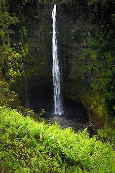 Jonathan Hansen - Akaka Falls 1
