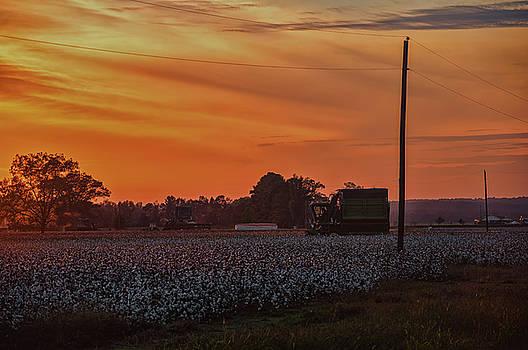 Daryl Clark - Alabama Cotton Fields
