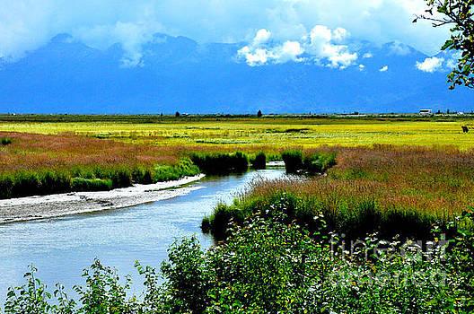Alaskan Wetlands by Tanya  Searcy
