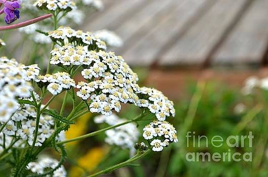 Alaskan Wildflowers by Kiana Carr