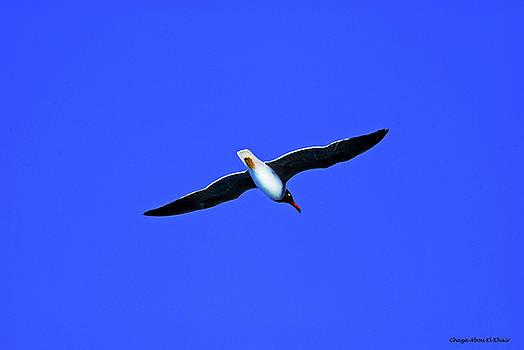 Albatros by Chaza Abou El Khair