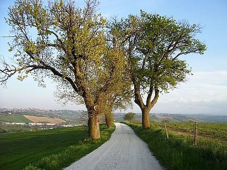 Alberi e colline by Alberto V  Donati