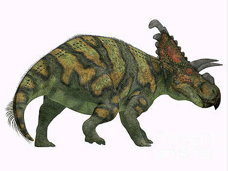 Albertaceratops Dinosaur Tail by Corey Ford