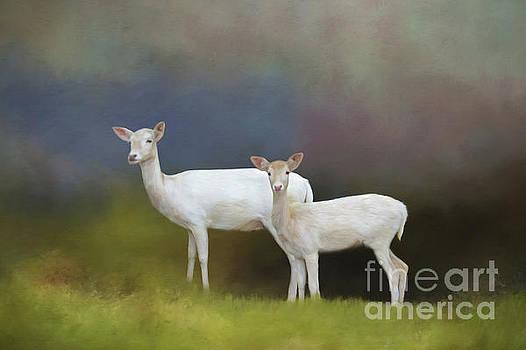 Albino Deer by Marion Johnson
