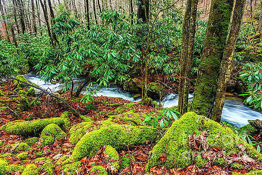 Aldrich Branch Monongahela National Forest by Thomas R Fletcher
