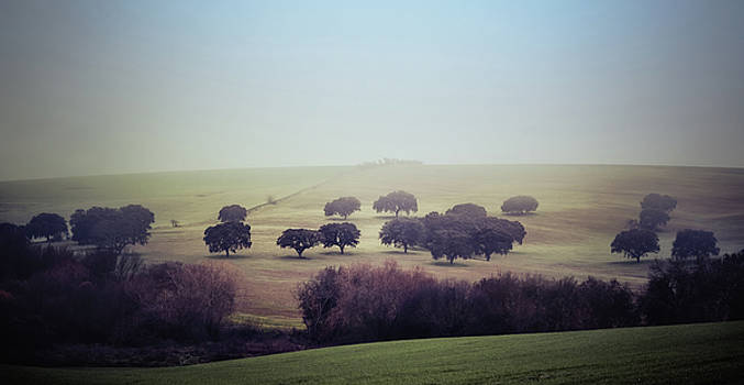Alentejo in the Mist by Marion McCristall