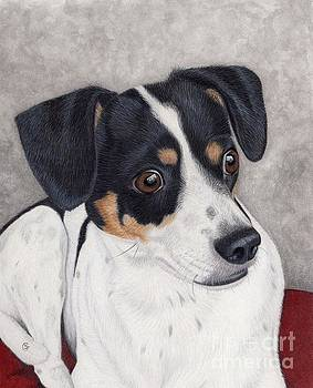 Alert Little Rat Terrier  by Sherry Goeben
