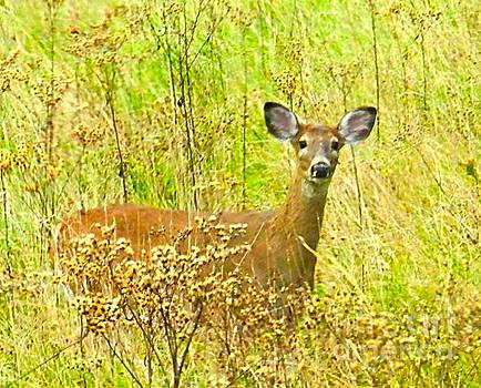 Julie Dant - Alert White Tail Doe in Field