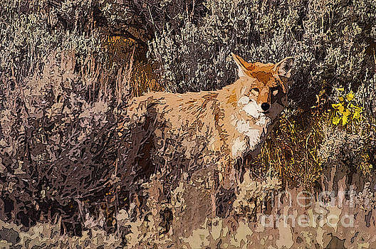 Bob Phillips - Alerted Coyote One 4