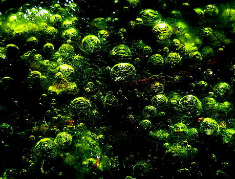 Algae Bubbles by Catherine Natalia  Roche