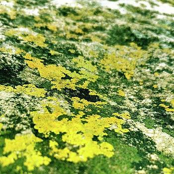 Algae On Rock-- Life Always Find The Way by Rajesh Yadav
