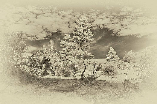 Alien Landscape Infrared by Jim Cook