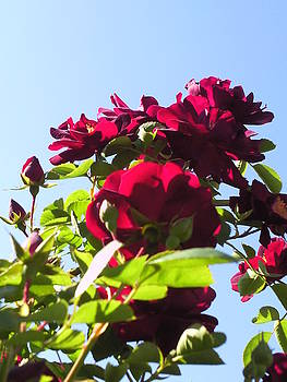 All About Roses and Blue Skies X by Daniel Henning