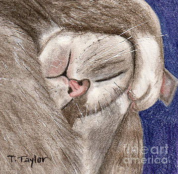 All Curled Up by Terry Taylor