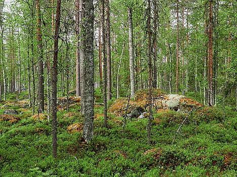 All Green by Jouko Lehto