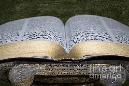 All Scripture by Diane Macdonald