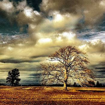 All Things Must Pass by Daniel Berman