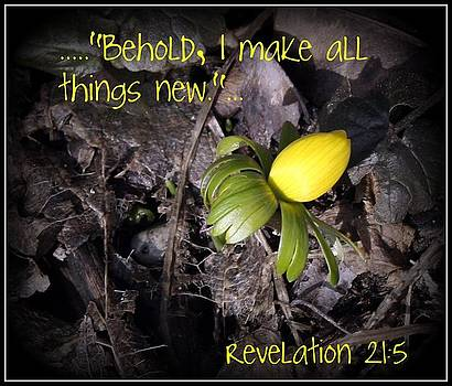All Things New by Elizabeth Babler