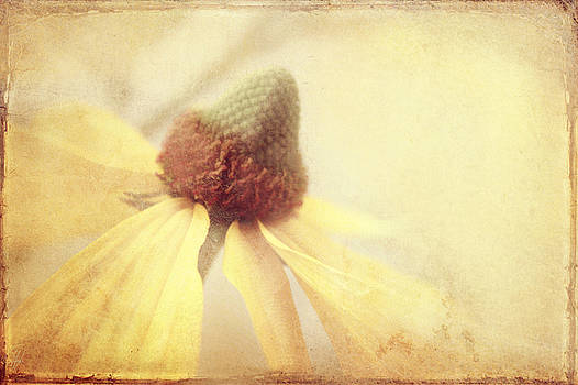 All Yellow by Margaret Hormann Bfa