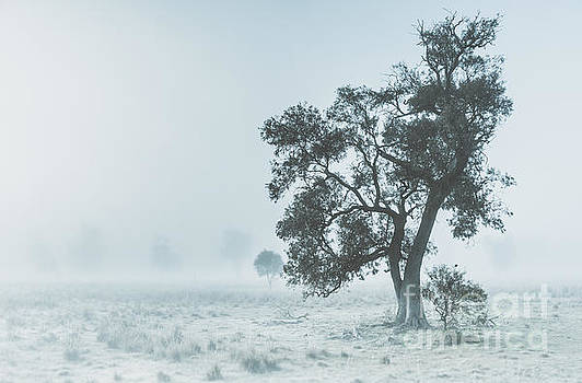 Alleena winter landscape by Jorgo Photography - Wall Art Gallery
