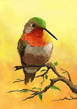 Allen's hummingbird by Konstantin Kolev