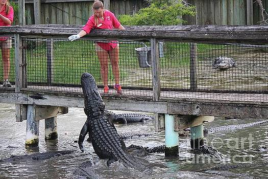 Paulette Thomas - Alligator Adventure