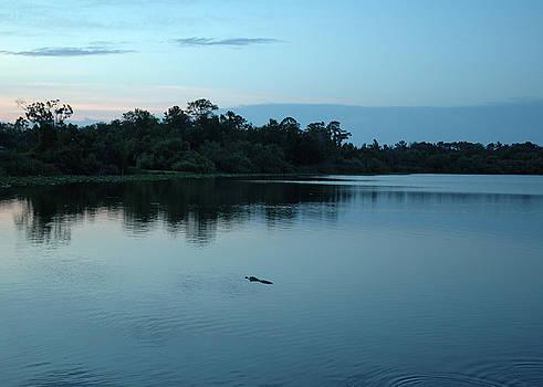 Kathi Shotwell - Alligator Afternoon