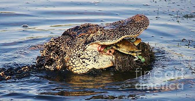 Paulette Thomas - Alligator Catching A Crab