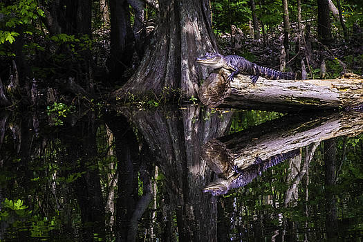 Chris Coffee - Alligators the Hunt, New Orleans, Louisiana