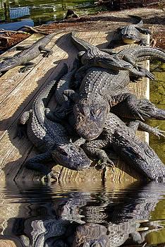 Alligator Party by TJ Baccari