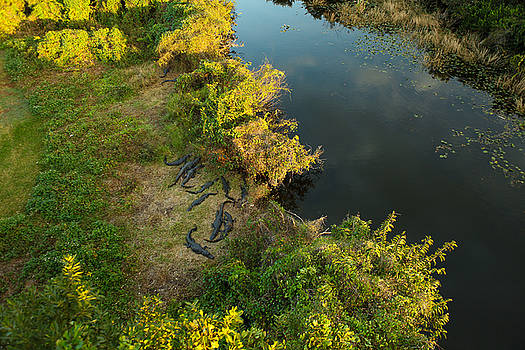 Alligator spot by Jorge Mejias