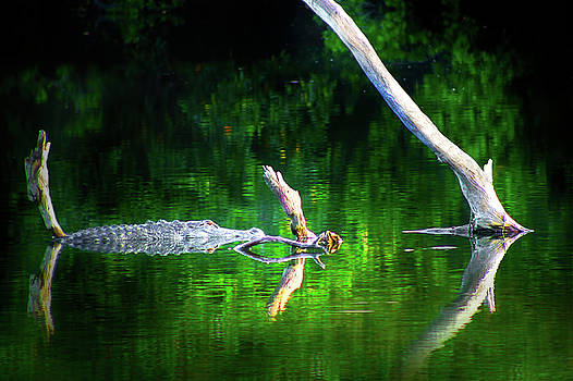 Alligator Summer by Mark Andrew Thomas
