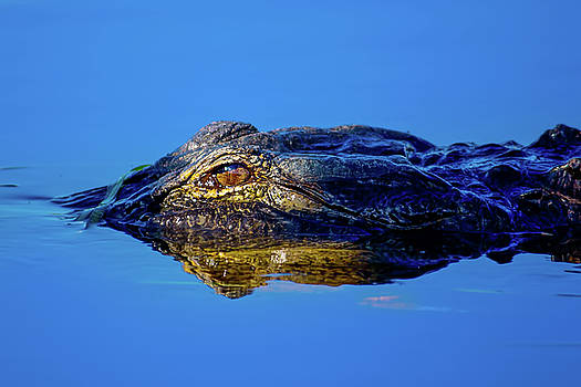 Alligator Sunrise by Mark Andrew Thomas