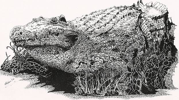 Bill Hubbard - Alligator