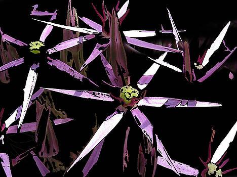 Allium by Dan McCarthy