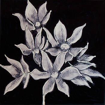 Allium Moly by Kym Nicolas