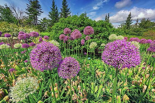 Alliums by Rick Berk