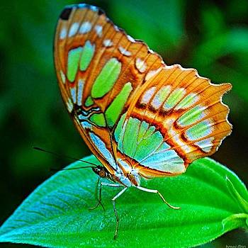 #allnatureshot #butterfly #butterflies by Kerri Ann Crau