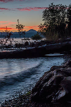 Almanor Driftwood by Jan Davies
