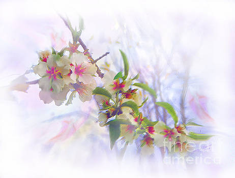 Almond Blossoms by Glenyss Bourne
